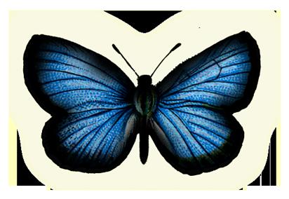 صور فراشة png - صور فراشات مفرغة بصيغة png Blue-butterfly